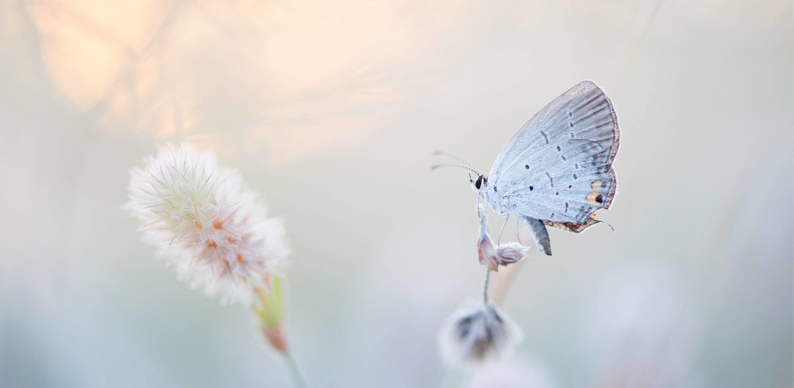 Ausbildung - Schmetterling auf einer Blume