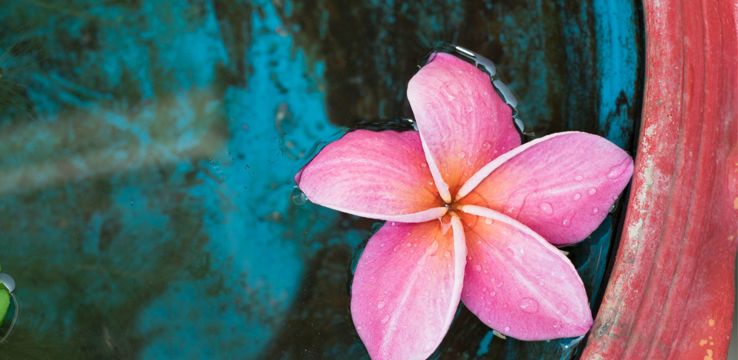 Lomi Lomi Nui - eine Blume auf dem Wasser