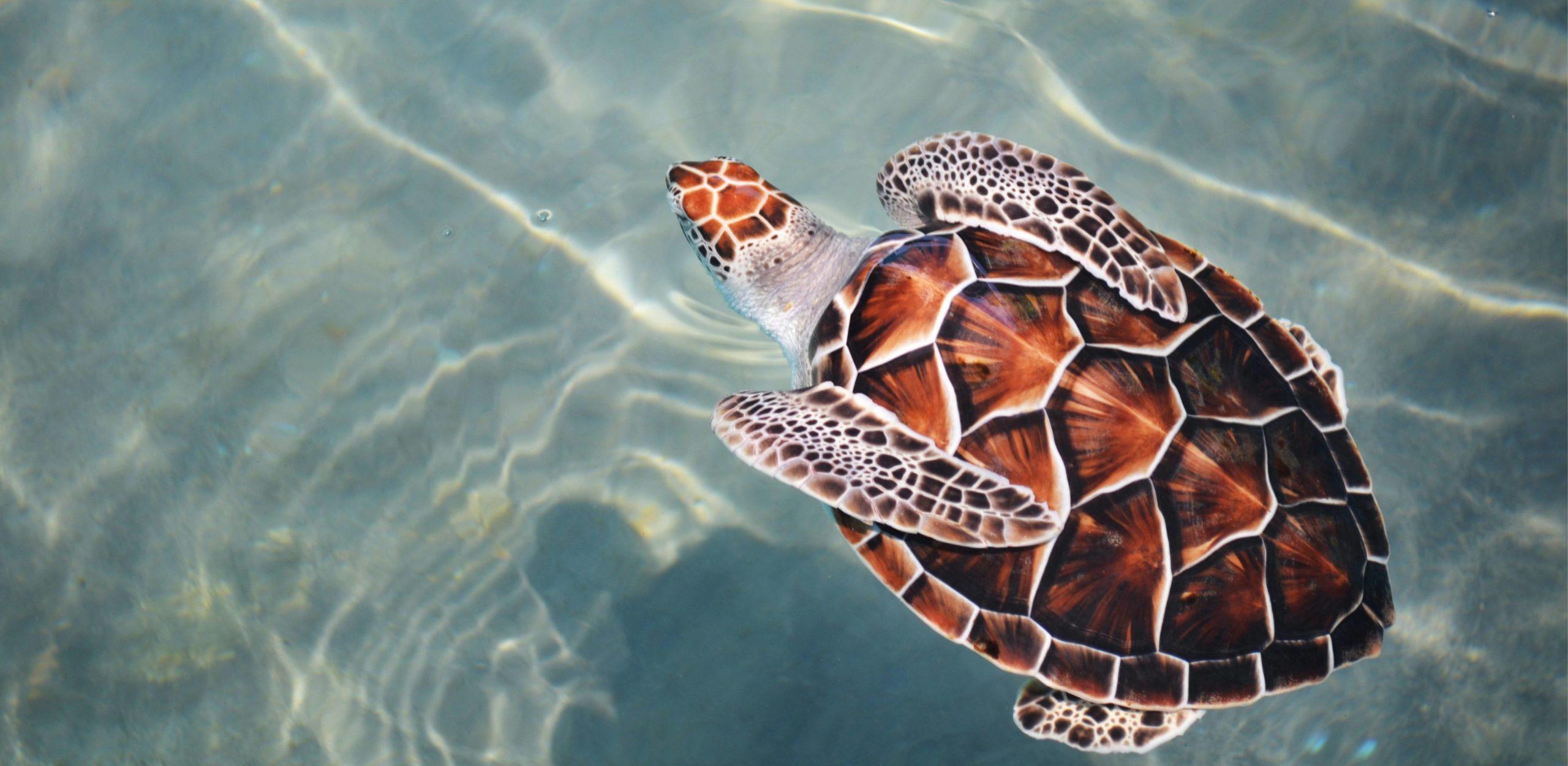 Preise - Schildkröte die im Wasser schwimmt